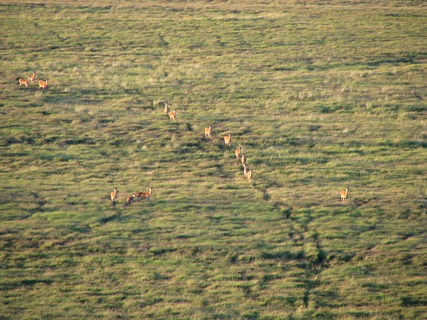 a Red Deer herd on Exmoor