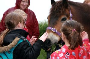 800_Meeting an Exmoor Pony ©2012 JasonPBall