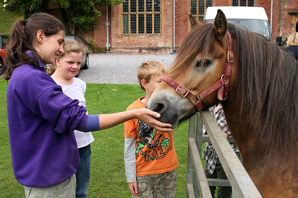 Meeting an Exmoor Pony with Linzi Green - Exmoor Pony Officer