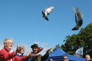 The racing pigeons being released by volunteers Caroline and Brian Seward and Education and Heart of Exmoor's Outreach Officer, David Rolls- photo by Aggz Waywell 2013